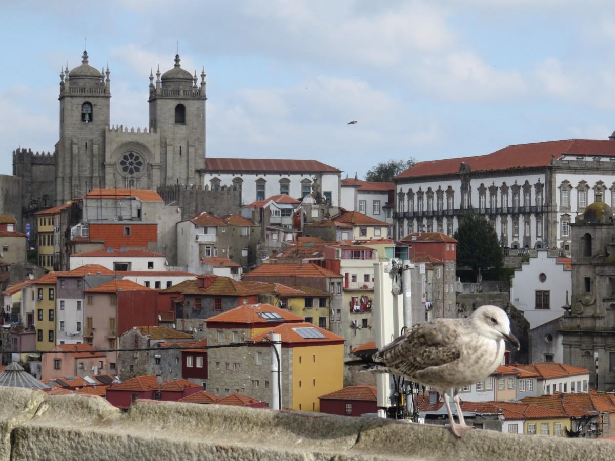 Zdjęcia: PORTO, PORTO, DACHY  PORTO, PORTUGALIA
