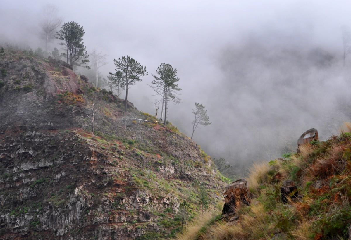 Zdjęcia: środek wyspy, Madera, W górach, PORTUGALIA