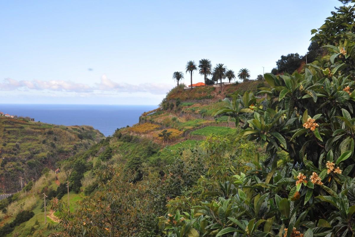Zdjęcia: okolice Sao Jorge, Madera, Dom z widokiem, PORTUGALIA