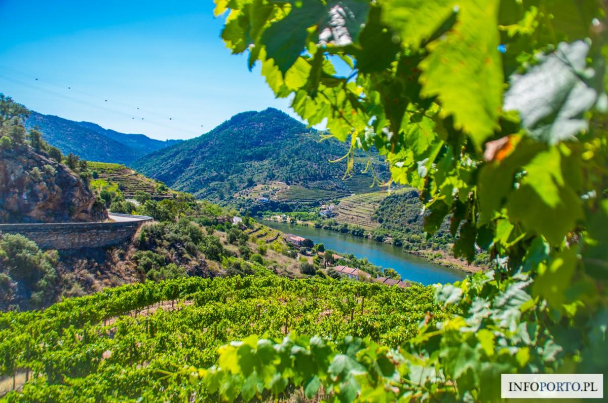 Zdjęcia: Droga N222, Douro, Dolina Douro, PORTUGALIA