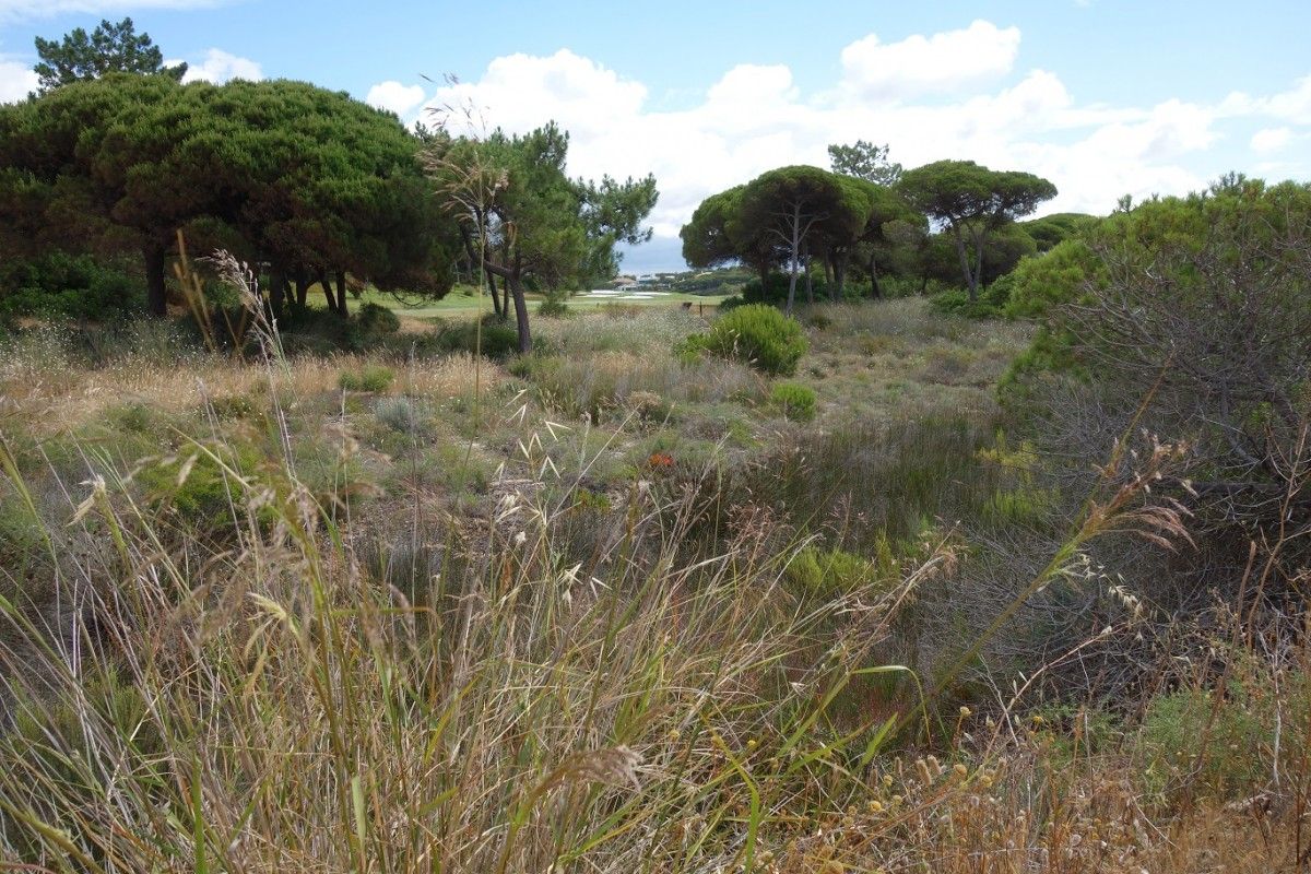 Zdjęcia: Okolice Faro, Algarve, Algarve, PORTUGALIA