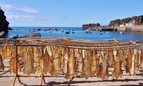 Zdjęcie PORTUGALIA / Madera / Camara de Lobos / Może rybkę?