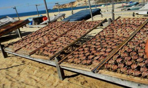 Zdjęcie PORTUGALIA / zachodnia Portugalia / Nazare / portugalski sposób suszenia ryb