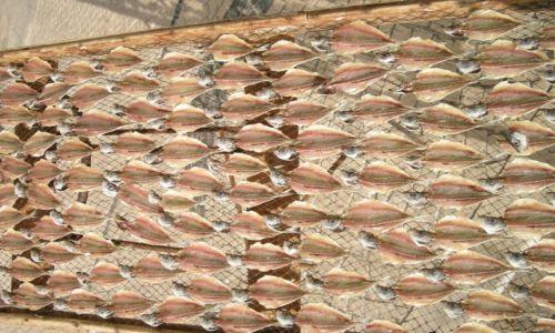 PORTUGALIA / Nazare / Nazare / Suszenie ryb