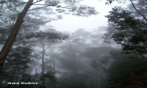 PORTUGALIA / Wyspa Madera / Wnętrze wyspy / Lasy laurowo-eukaliptusowe