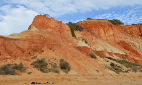 Zdjecie PORTUGALIA / Algarve / Klify na plazy Falesia / Klify