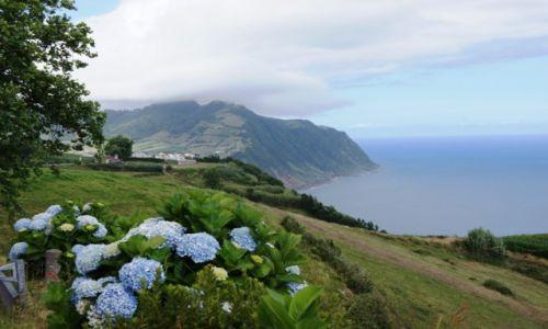 Zdjęcie PORTUGALIA / Azory / Furnas / Przydrożne hortensje