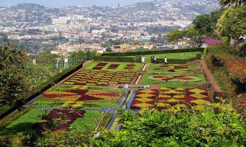Zdjęcie PORTUGALIA / Madera / Funchal / Ogród botaniczny w Funchal