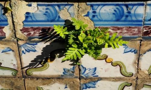 Zdjęcie PORTUGALIA / zachodnia część Płw. Iberyjskiego / Lizbona / W słońcu