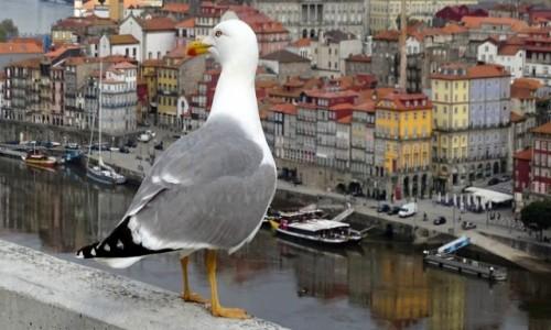 Zdjecie PORTUGALIA / północna Portugalia / Porto / W kolorach Ribeiry ;)