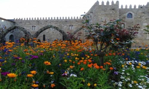 PORTUGALIA / północna Portugalia / Braga - ogrody św. Barbary / Łąka w mieście