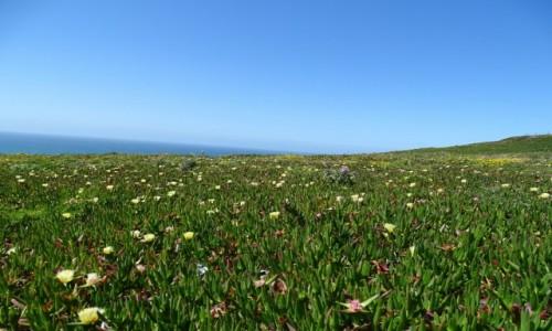 Zdjęcie PORTUGALIA / Park Narodowy Sintra-Cascais / Cabo da Roca / Wiosenne kobierce