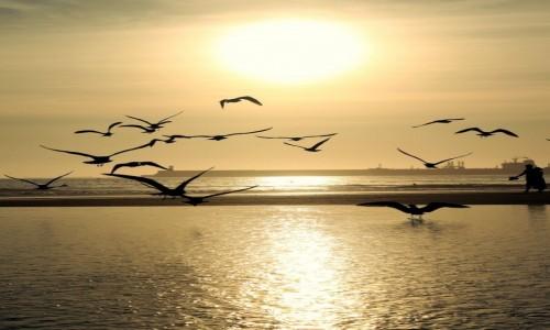 Zdjęcie PORTUGALIA / Porto / Plaża Matosinhos / Ptaki