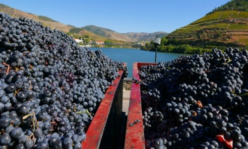 Zdjecie PORTUGALIA / dolina Douro / Pinhao / wino