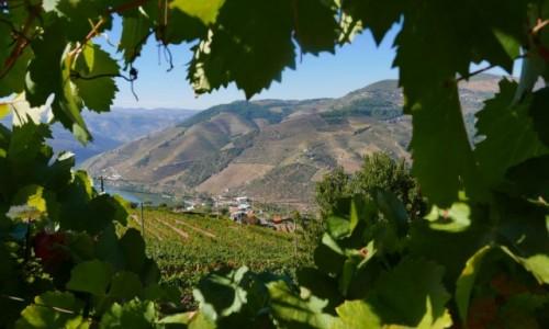 Zdjecie PORTUGALIA / dolina Douro / Winiarnia D'Origem Winho / miedzy winem na