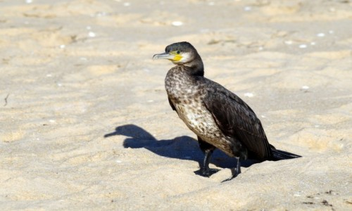 Zdjęcie PORTUGALIA / Algarve / Vilamoura /  -spacerek po plaży -