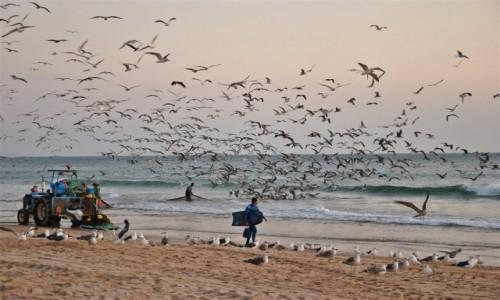 PORTUGALIA / Almada / Costa da Caparica / lokalny połów ryb
