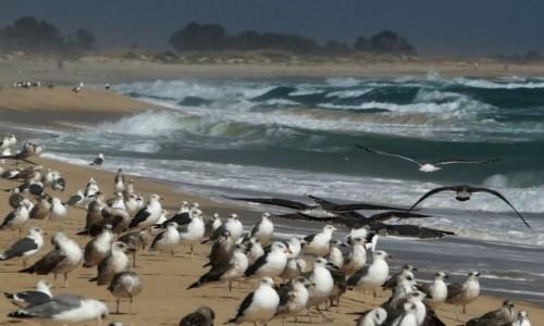 Zdjęcie PORTUGALIA / Algarve / Laguna Ria Formosa / dzike plaże w Parku Rzeki Formosa