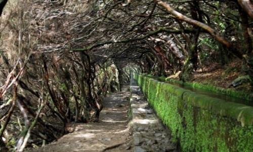 Zdjęcie PORTUGALIA / Madera / Levada das 25 Fontes / Tunel