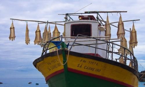 Zdjecie PORTUGALIA / Madera / port w Camara de Lobos / Suszenie dorszy