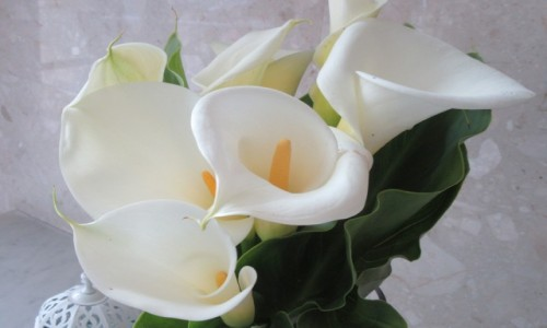 Zdjęcie PORTUGALIA / Madera / Madera / Kwiaty na Maderze
