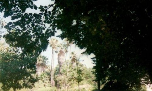 Zdjecie PORTUGALIA / brak / Ogród botaniczny w Lizbonie / W centrum stolicy