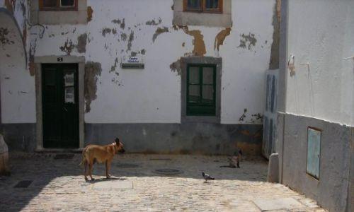 Zdjecie PORTUGALIA / brak / stare miasto faro / zaraz pogonie ci kota