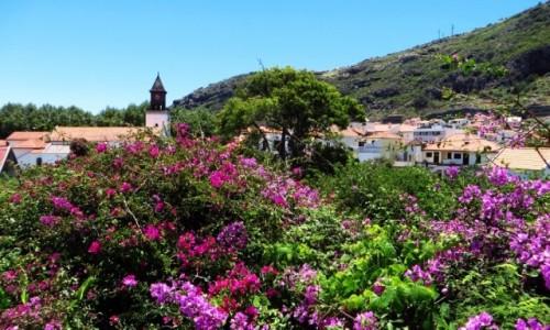 Zdjecie PORTUGALIA / Madera / Machico / Machico miasto kwiatów