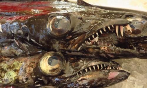 Zdjęcie PORTUGALIA / Madera / Funchal / espada - atlantycki potwór