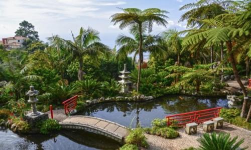 Zdjecie PORTUGALIA / Madera / Funchal / Monte Palace Tropical Garden