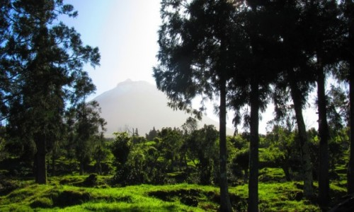 Zdjecie PORTUGALIA / Azory / Pico / U podnóża wulkanu Pico