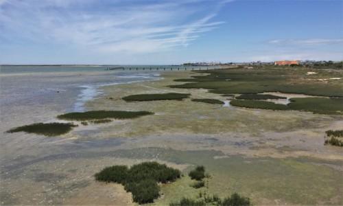 Zdjecie PORTUGALIA / Algarve / Ria Formosa Natural Park / Ria Formosa...