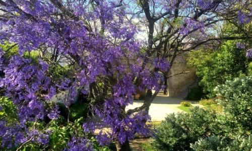 Zdjecie PORTUGALIA / Algarve / Tavira / czekając na wiosnę...