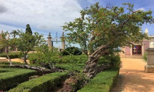 Zdjecie PORTUGALIA / Algarve / Palacio de Estoi - ogrody / w ogrodzie...