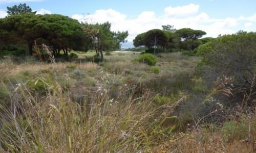 PORTUGALIA / Algarve / Okolice Faro / Algarve