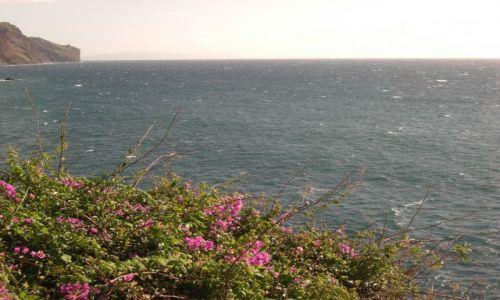 Zdjęcie PORTUGALIA / brak / Madeira - Funchal / Kwiaty i woda