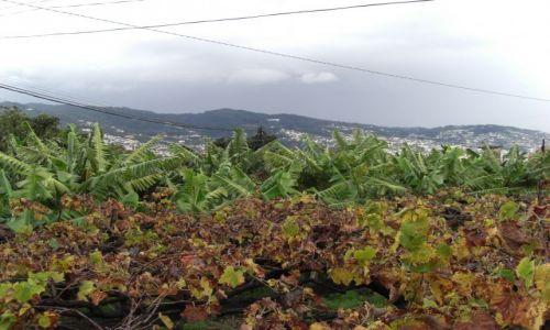 Zdjęcie PORTUGALIA / brak / Madeira - Funchal / Winogron i bananowce