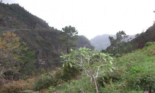 Zdjecie PORTUGALIA / brak / Madeira - Funchal / Góry 5