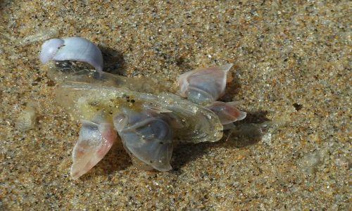 Zdjecie PORTUGALIA / Algarve / Południe Portugalii / Wyrzucone na brzeg