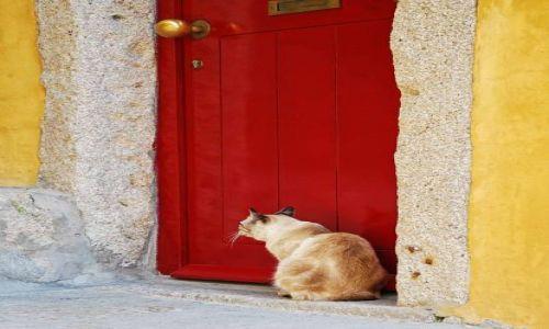 Zdjecie PORTUGALIA / Grande Porto / Porto / Let me in