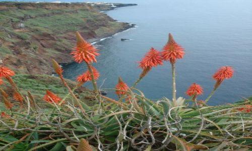 Zdjecie PORTUGALIA / Madeira / Madeira / Exotic flower