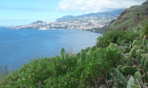 Zdjecie PORTUGALIA / Madeira / Madeira / Widoczek
