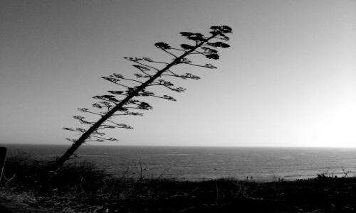 Zdjecie PORTUGALIA / południe / Olosz de aqua / drzewo