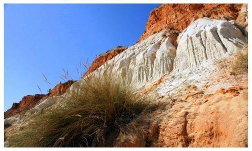 Zdjecie PORTUGALIA / Algarve / plaża / Trawa