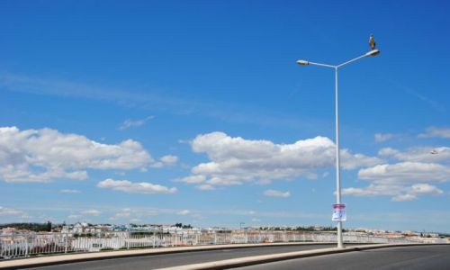 Zdjecie PORTUGALIA / Algarve / Tavira / Bocian góruje nad Tavirą