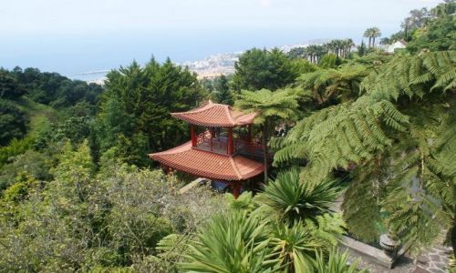 Zdjecie PORTUGALIA / - / Monte- ogród tropikalny / MADERA