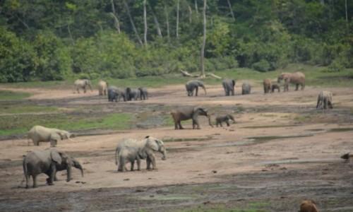 Zdjęcie REPUBLIKA ŚRODKOWEJ AFRYKI / Sangha / Park Narodowy Dzanga Sangha / Dzanga Bai