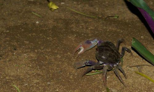Zdjęcie REPUBLIKA ŚRODKOWEJ AFRYKI / Sao Tome / Rolas / ...