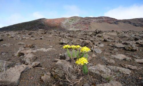 Zdjęcie REUNION / Okręg Saint-Pierre / okolice Piton de la Fournace / Krajobraz wulkaniczny
