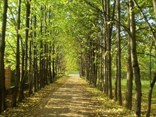Zdjęcia: muzeum kuskowo, moskwa, rosjanie też mają piękną jesień, ROSJA